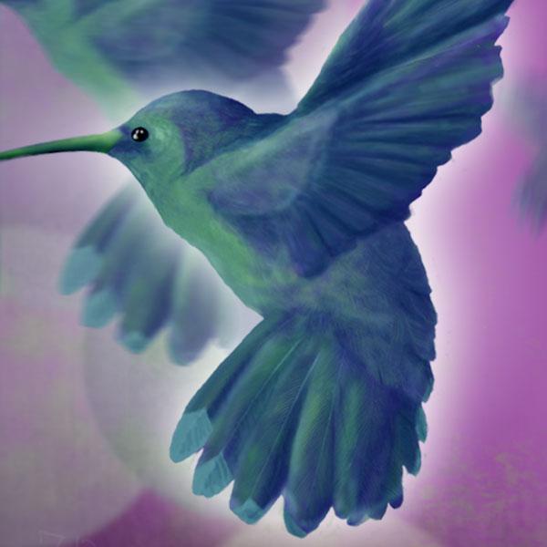 blue hummingbird close up