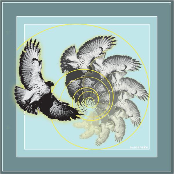 Spiral-Hawk
